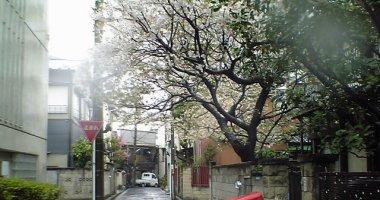 寒空と雨で桜も・・・